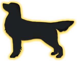 Moinho do Céu - Flat Coated Retriever