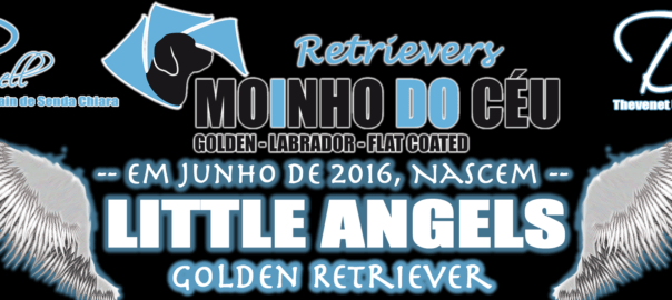 Ninhada Golden Retriever Little Angels - Moinho do Céu